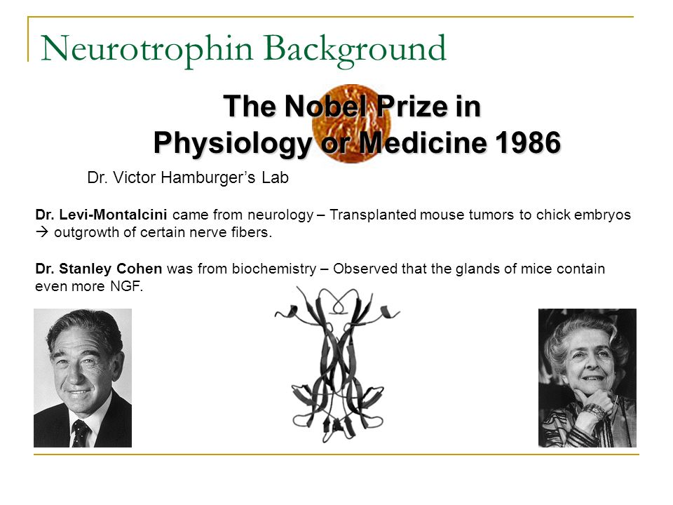 Neurotrophin Background Dr. Levi-Montalcini came from neurology – Transplanted mouse tumors to chick embryos outgrowth of certain nerve fibers. Dr. St