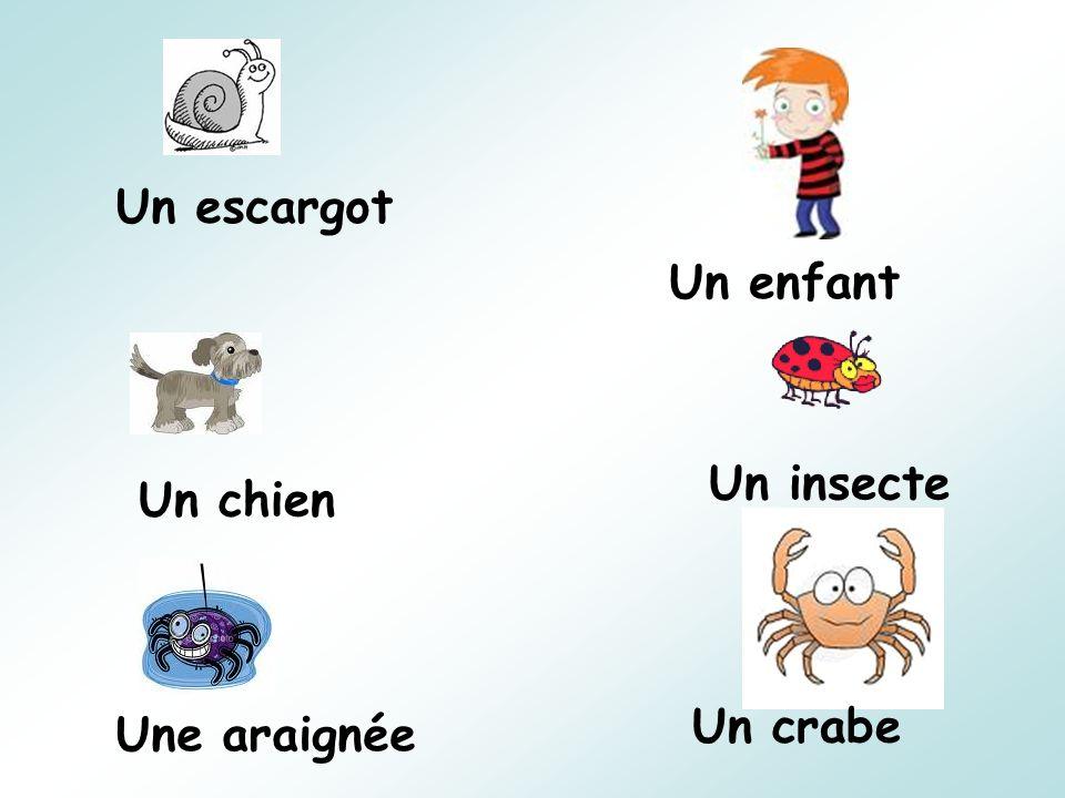 Un escargot Un enfant Un chien Un insecte Une araignée Un crabe