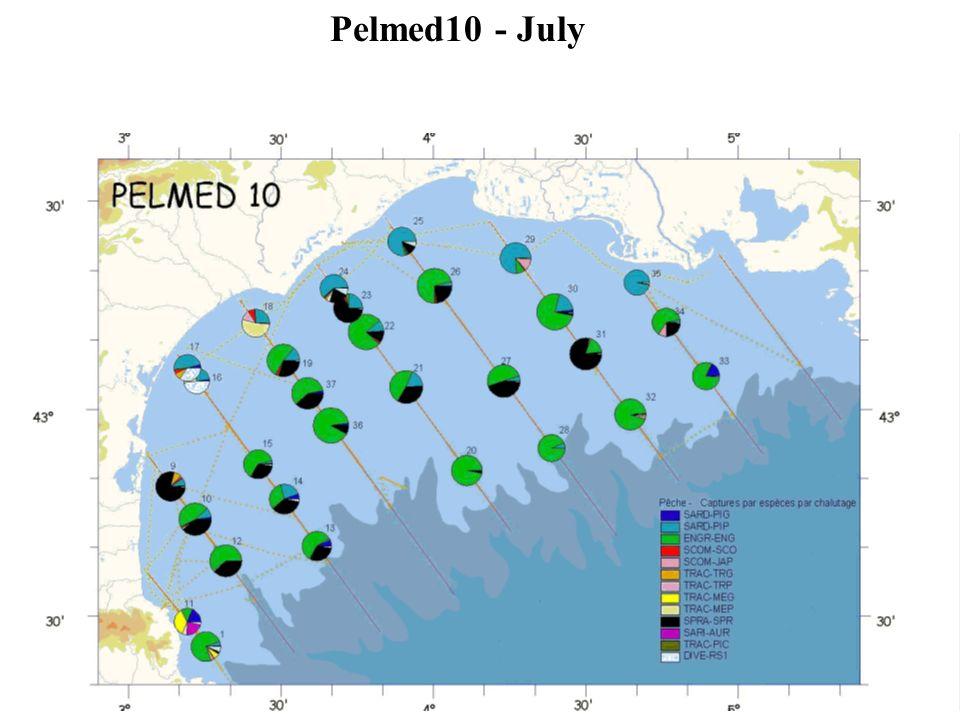 Pelmed10 - July