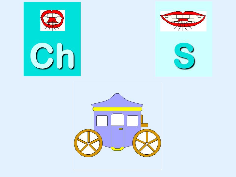 autruche Ch SSSS