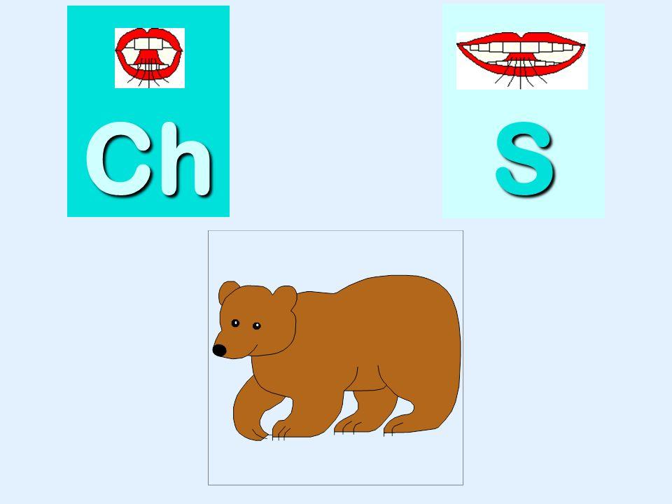 niche Ch SSSS