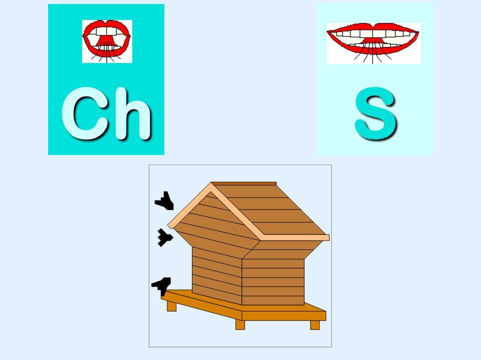 quiche Ch SSSS
