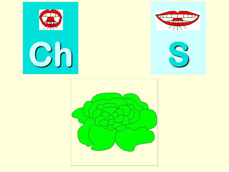 chenille Ch SSSS