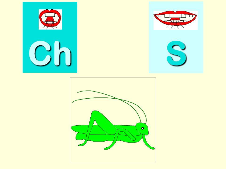 salade Ch SSSS