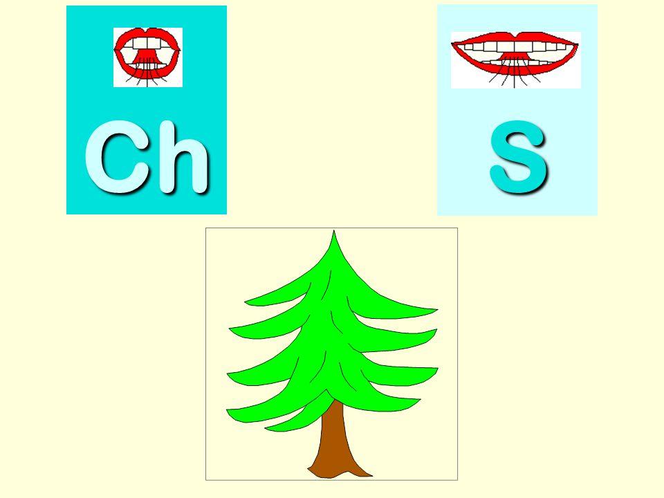 champion Ch SSSS
