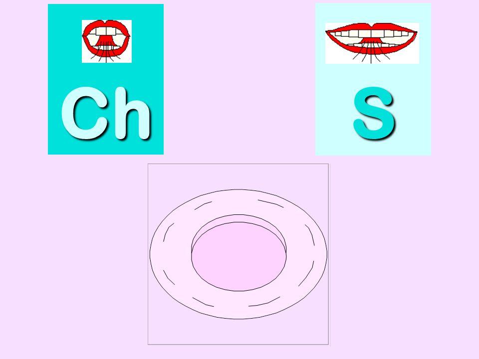 artichaut Ch SSSS