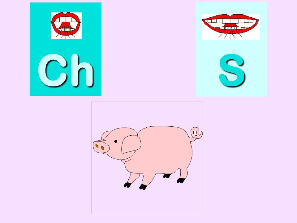 classeur Ch SSSS