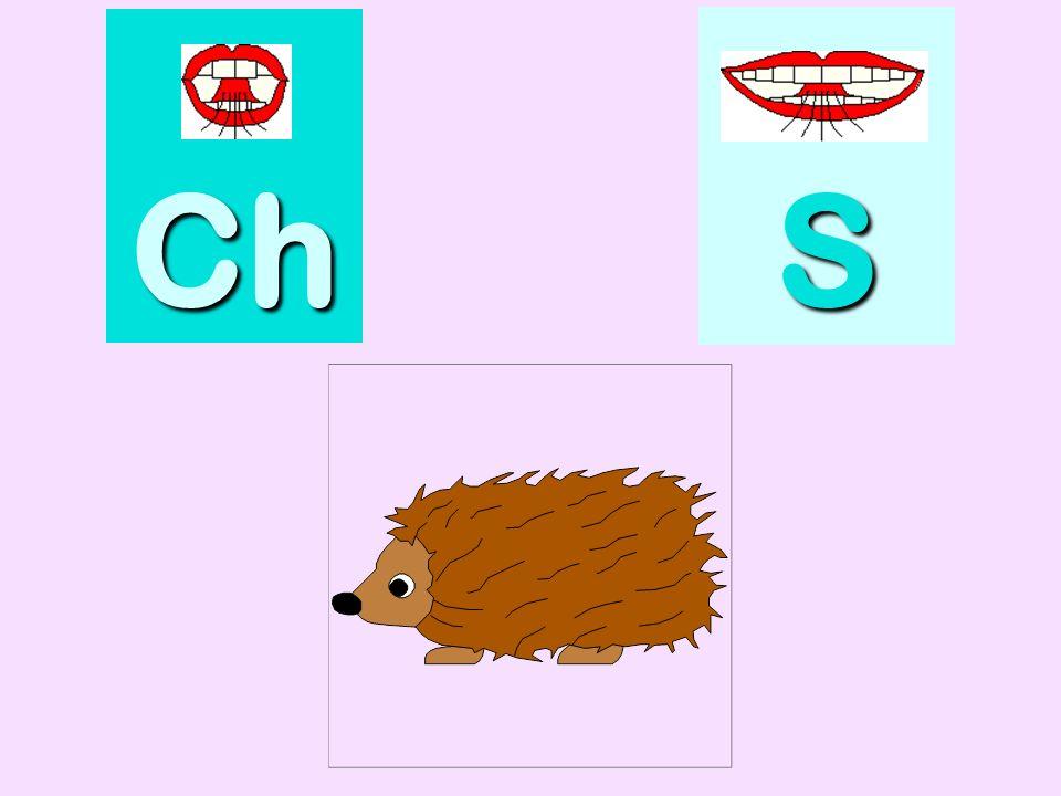 fourchette Ch SSSS