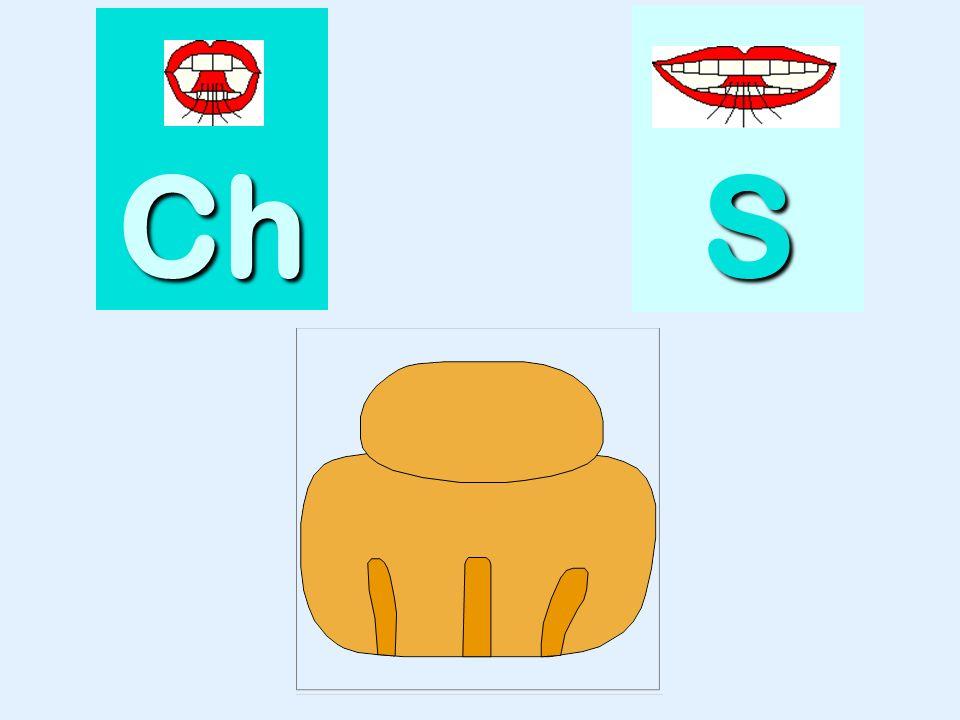 branche Ch SSSS