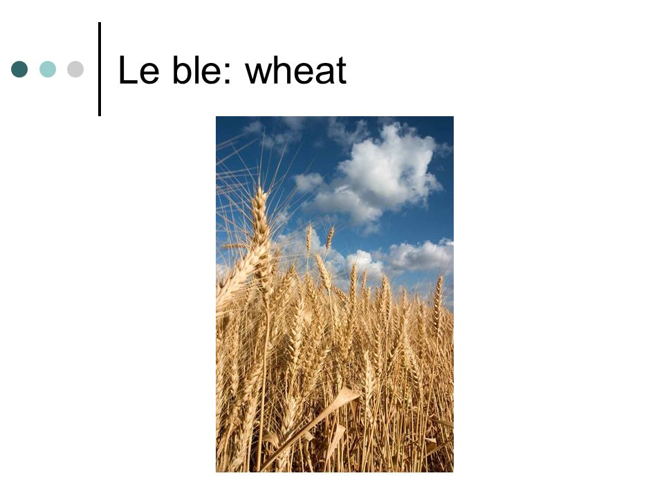 Le ble: wheat