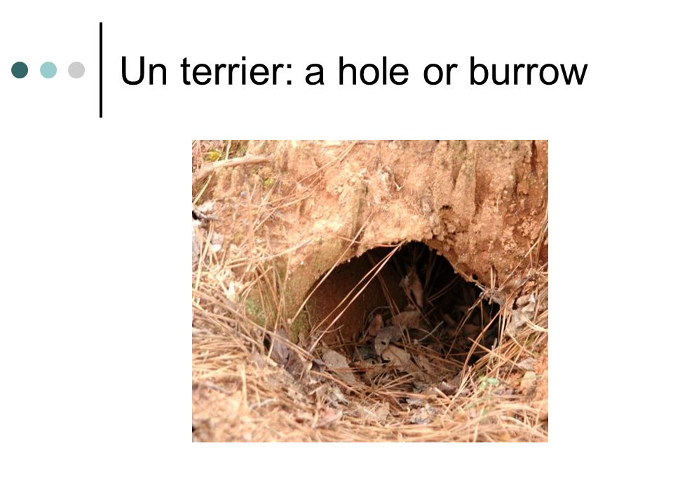 Un terrier: a hole or burrow