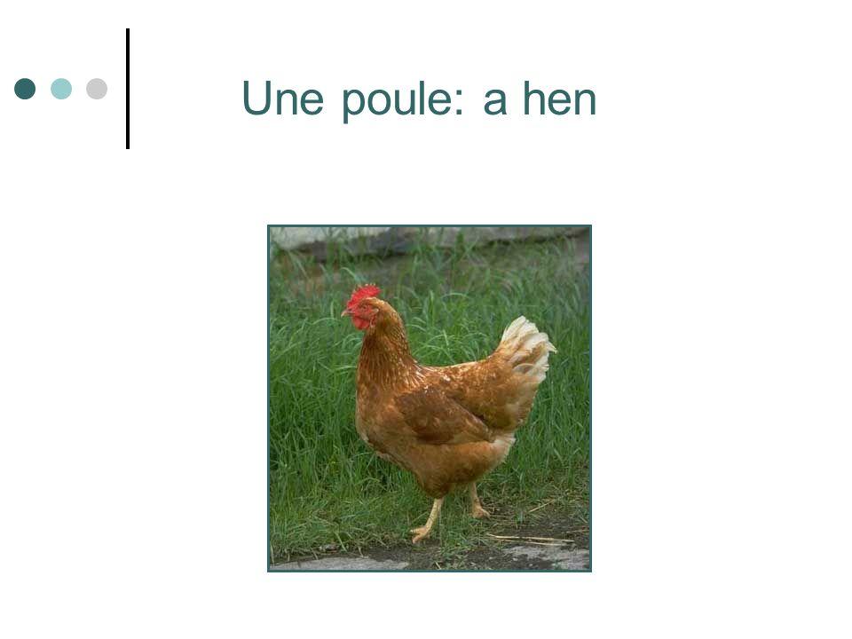 Une poule: a hen