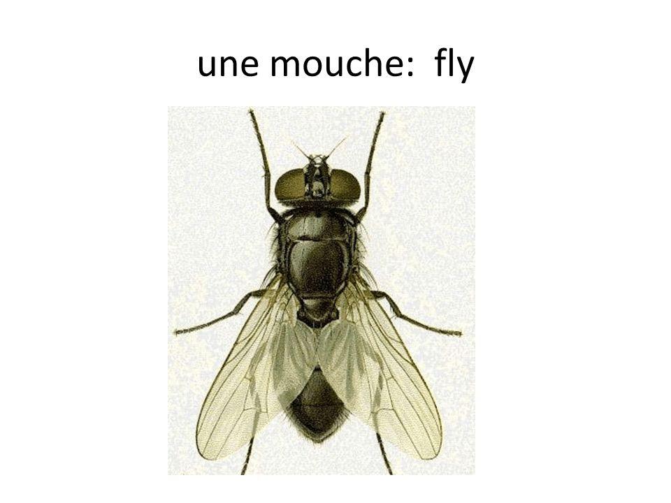 une mouche: fly