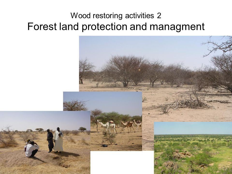 Wood restoring activities 2 Forest land protection and managment