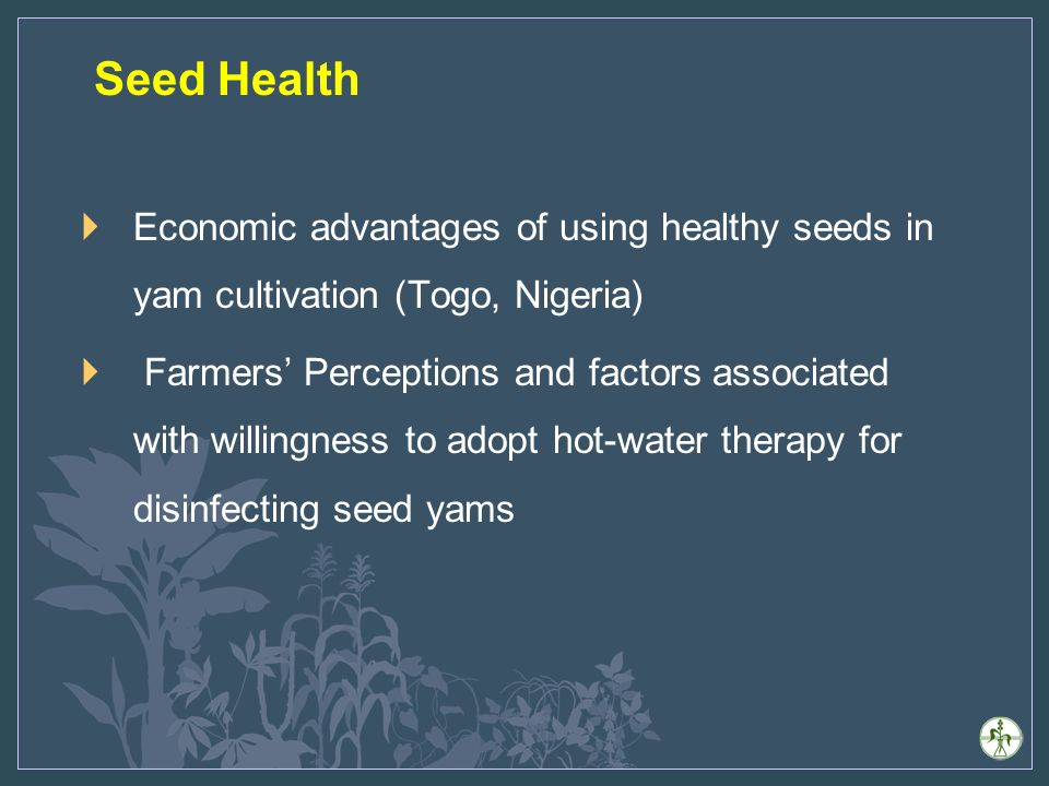 Economic advantages of using healthy seeds in yam cultivation (Togo, Nigeria) Farmers Perceptions and factors associated with willingness to adopt hot-water therapy for disinfecting seed yams Seed Health