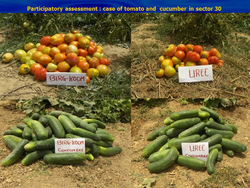 Participatory assessment : case of tomato and cucumber in sector 30