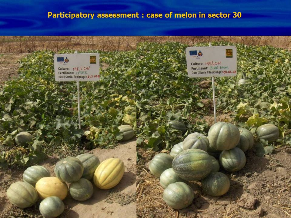 Participatory assessment : case of melon in sector 30