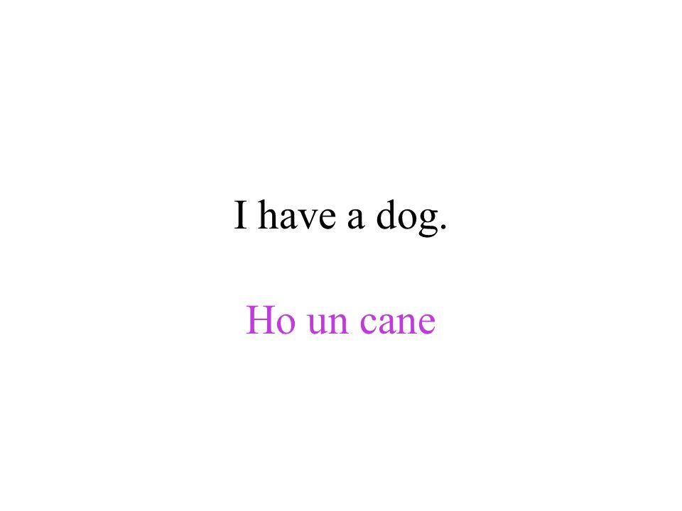 I have a dog. Ho un cane
