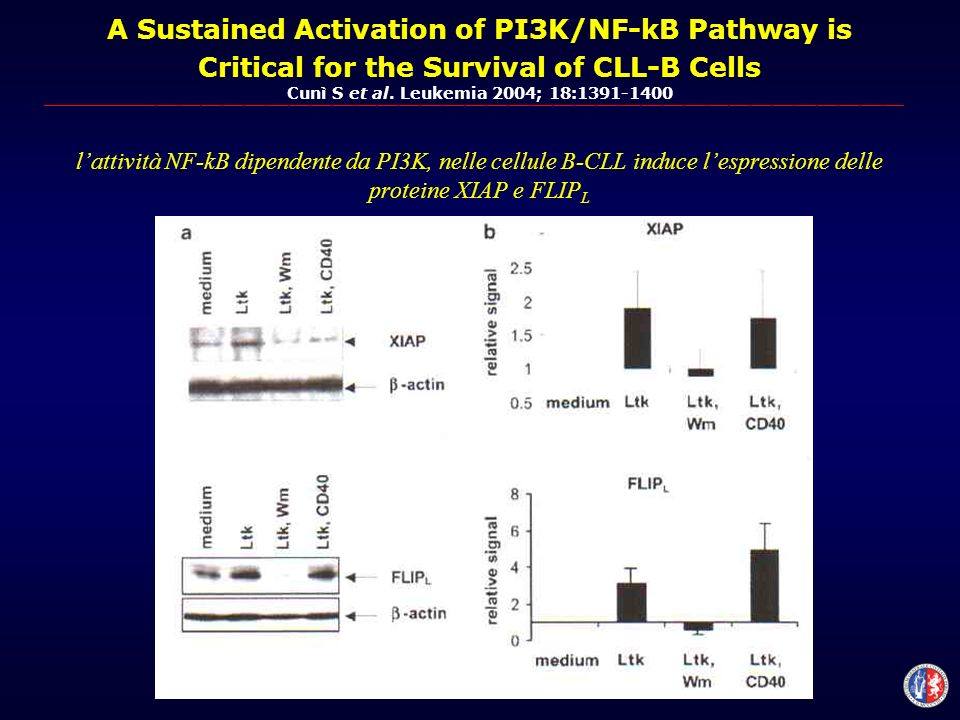 A Sustained Activation of PI3K/NF-kB Pathway is Critical for the Survival of CLL-B Cells Cunì S et al.