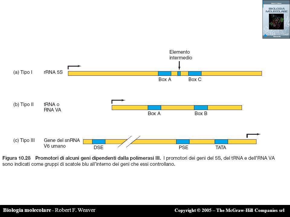 Biologia molecolare - Robert F. Weaver Copyright © 2005 – The McGraw-Hill Companies srl