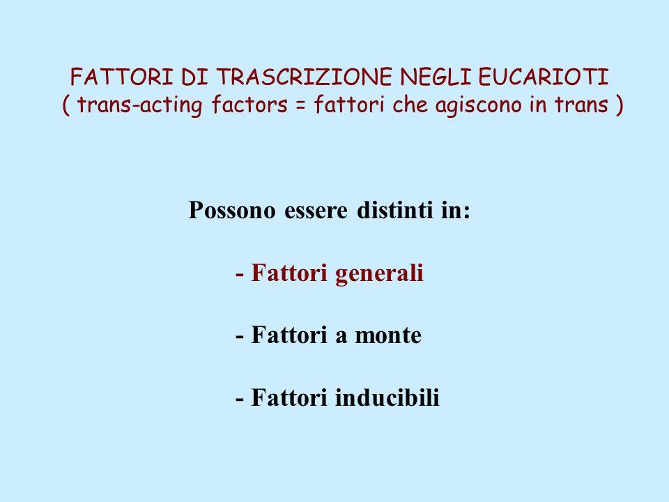 FATTORI DI TRASCRIZIONE NEGLI EUCARIOTI ( trans-acting factors = fattori che agiscono in trans ) Possono essere distinti in: - Fattori generali - Fatt