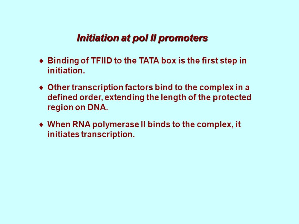 Initiation at pol II promoters Binding of TFIID to the TATA box is the first step in initiation. Other transcription factors bind to the complex in a