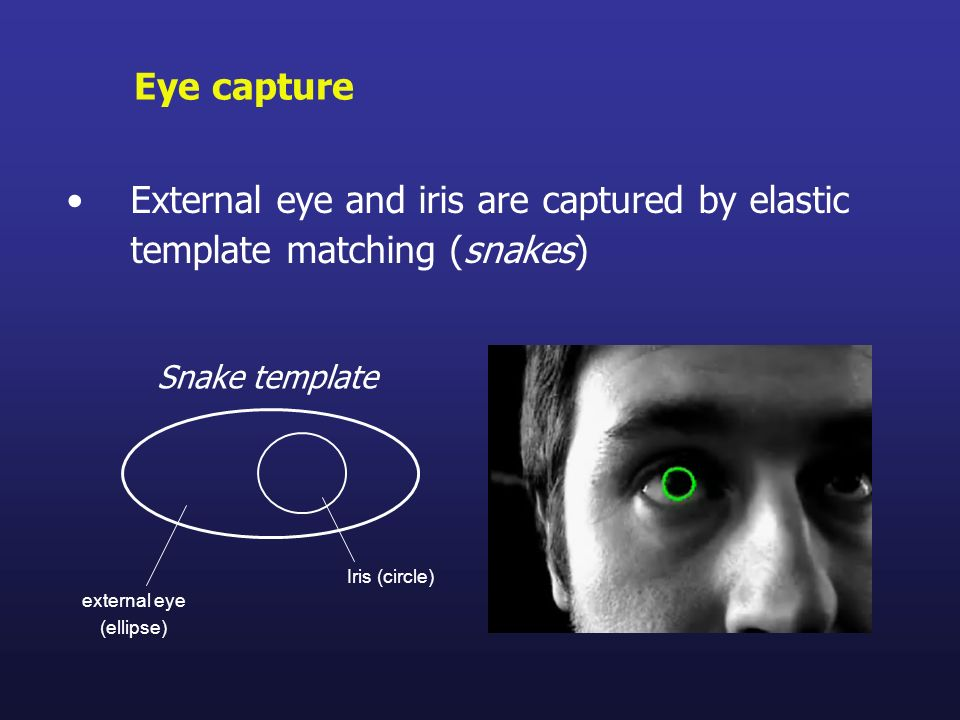 External eye and iris are captured by elastic template matching (snakes) Eye capture Snake template Iris (circle) external eye (ellipse)