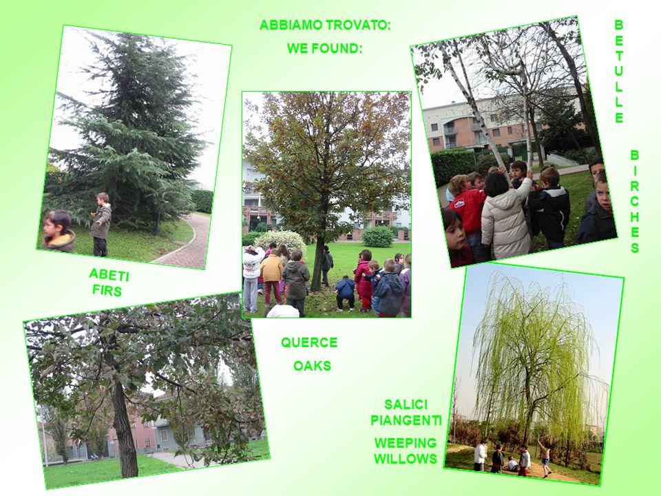 Se fossi… … UN ALBERO If I were… … A TREE WE GO TO DISCOVER TREES AROUND OUR SCHOOL USCIAMO PER SCOPRIRE CHE ALBERI CI SONO VICINO ALLA NOSTRA SCUOLA