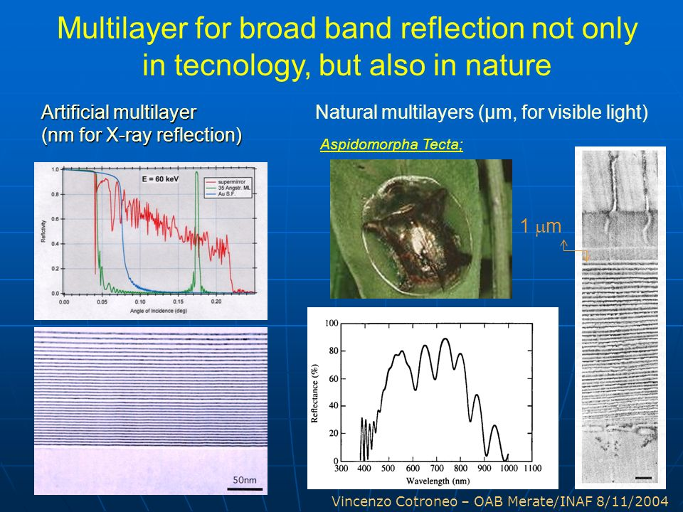 Vincenzo Cotroneo – OAB Merate/INAF 8/11/2004 1 m Aspidomorpha Tecta; Multilayer for broad band reflection not only in tecnology, but also in nature N