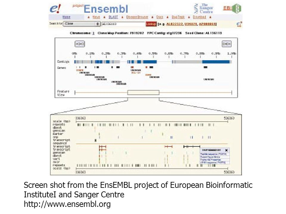 Screen shot from the EnsEMBL project of European Bioinformatic InstituteI and Sanger Centre http://www.ensembl.org