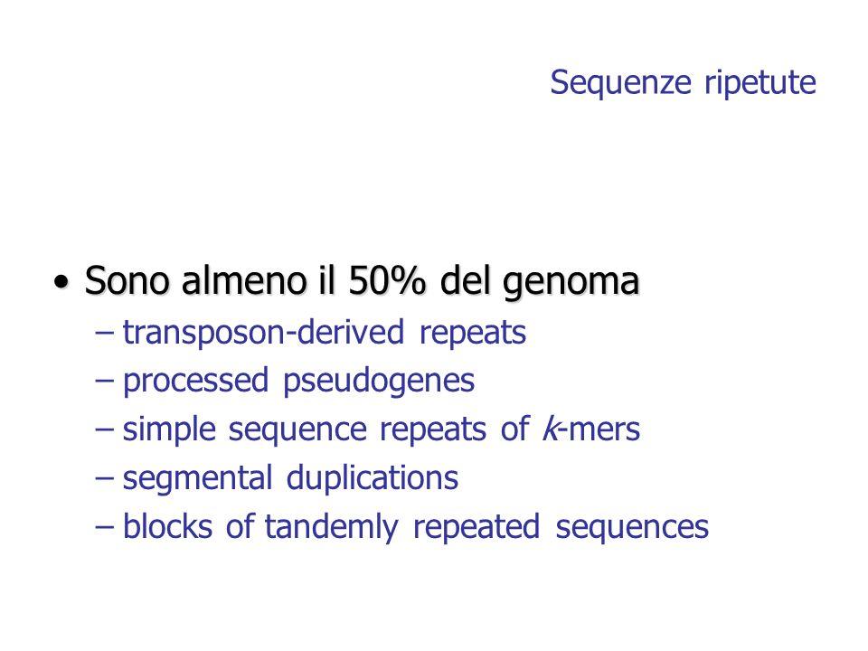 Sequenze ripetute Sono almeno il 50% del genomaSono almeno il 50% del genoma –transposon-derived repeats –processed pseudogenes –simple sequence repea
