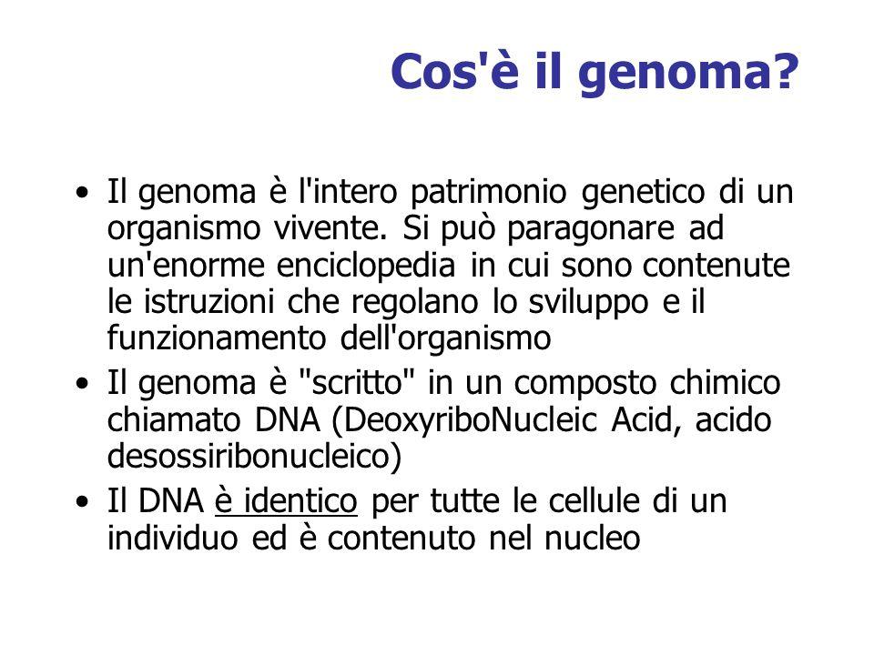 Cos'è il genoma? Il genoma è l'intero patrimonio genetico di un organismo vivente. Si può paragonare ad un'enorme enciclopedia in cui sono contenute l