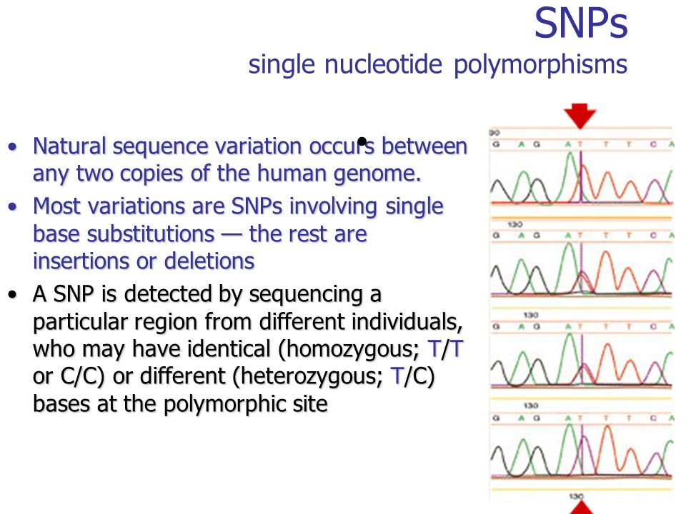 SNPs single nucleotide polymorphisms Natural sequence variation occurs between any two copies of the human genome.Natural sequence variation occurs be