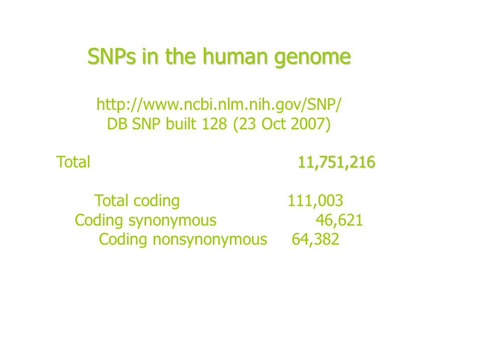 SNPs in the human genome http://www.ncbi.nlm.nih.gov/SNP/ DB SNP built 128 (23 Oct 2007) 11,751,216 Total 11,751,216 Total coding 111,003 Coding synon