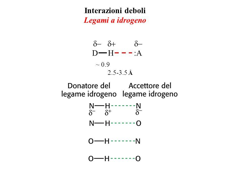 Interazioni deboli Legami a idrogeno D H :A ~ 0.9 2.5-3.5 Å