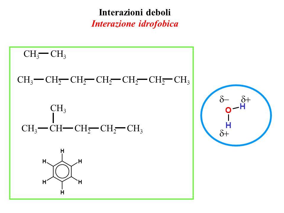 Interazioni deboli Interazione idrofobica CH 3 CH 2 CH 3 CHCH 2 CH 3 O H H H H H H H H