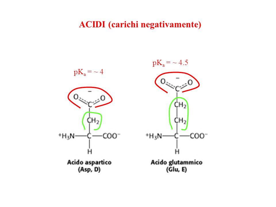 ACIDI (carichi negativamente) pK a = ~ 4 pK a = ~ 4.5