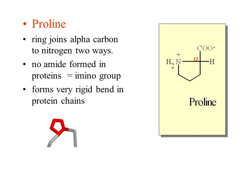 Proline ring joins alpha carbon to nitrogen two ways. no amide formed in proteins = imino group forms very rigid bend in protein chains