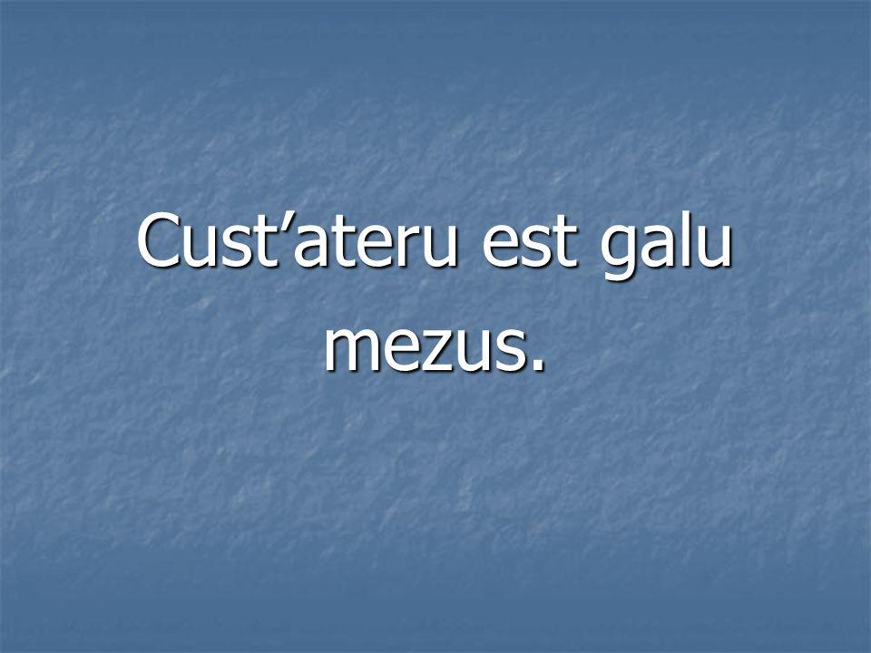 Custateru est galu mezus.