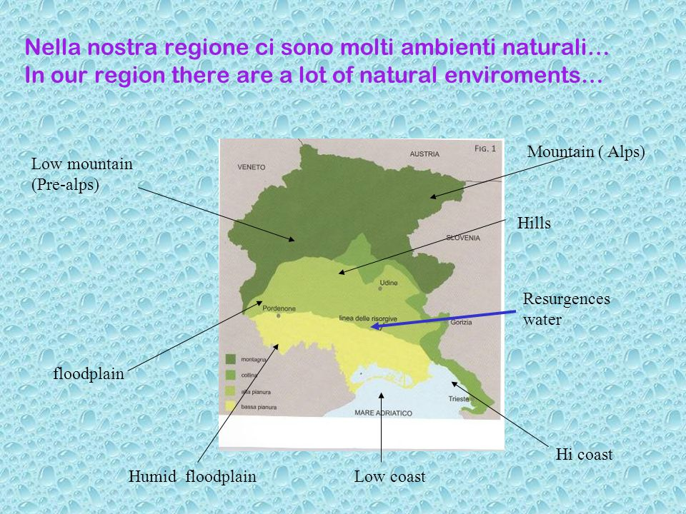 Nella nostra regione ci sono molti ambienti naturali… In our region there are a lot of natural enviroments… floodplain Low mountain (Pre-alps) Mountain ( Alps) Hills Humid floodplain Low coast Resurgences water Hi coast