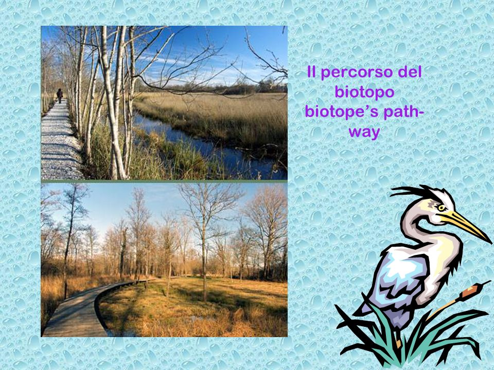 Il percorso del biotopo biotopes path- way