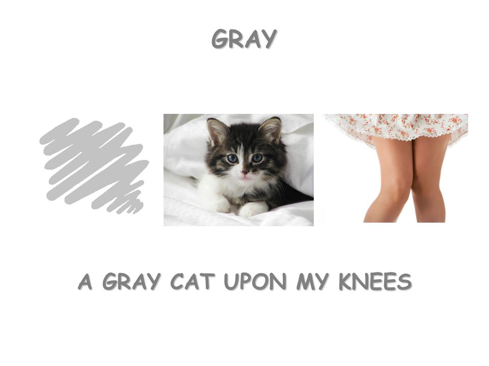 A GRAY CAT UPON MY KNEES GRAY