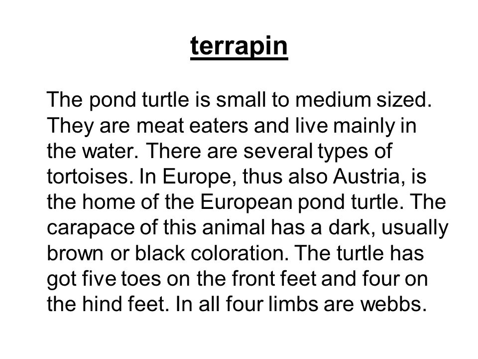 terrapin The pond turtle is small to medium sized. They are meat eaters and live mainly in the water. There are several types of tortoises. In Europe,
