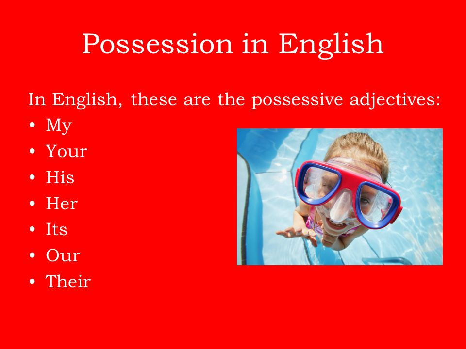 Possession in English In English, these are the possessive adjectives: My Your His Her Its Our Their