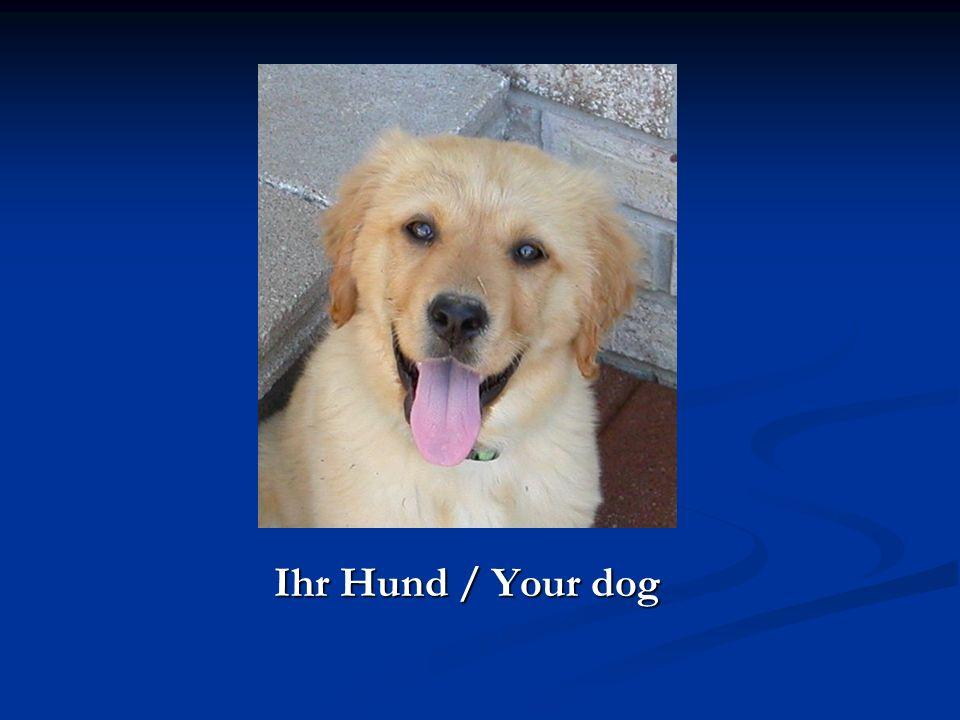 Ihr Hund / Your dog Ihr Hund / Your dog