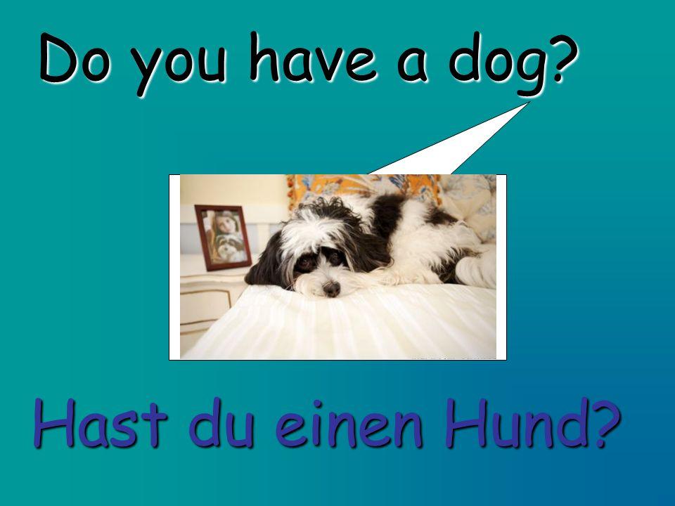 Do you have a dog? Hast du einen Hund?