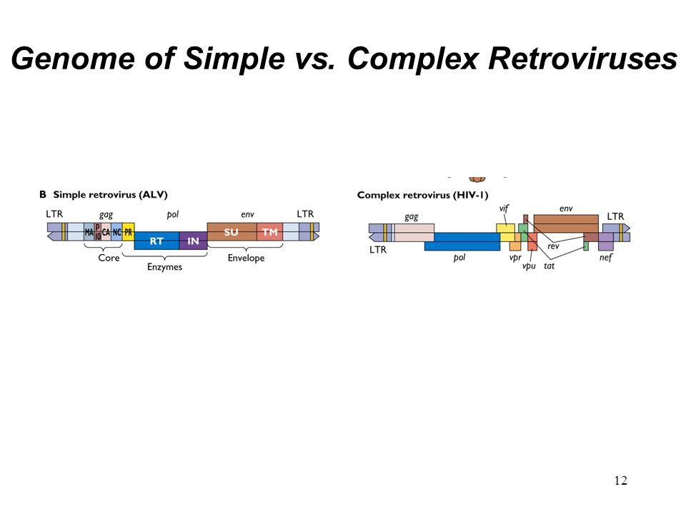 12 Genome of Simple vs. Complex Retroviruses