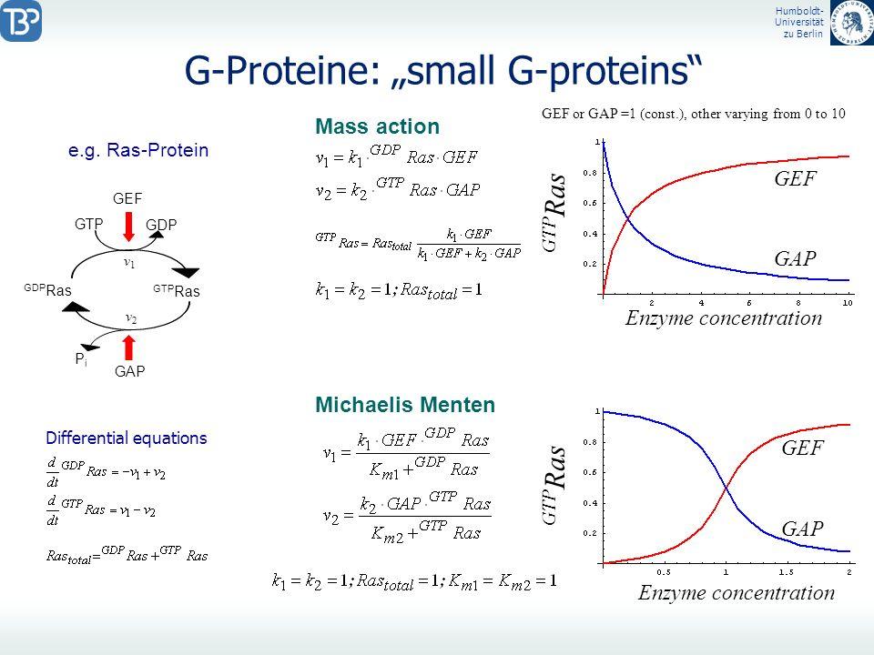 Humboldt- Universität zu Berlin G-Proteine: small G-proteins e.g. Ras-Protein GDP Ras GTP Ras GDP GTP GEF GAP PiPi v1v1 v2v2 GTP Ras GAP GEF GAP GEF D