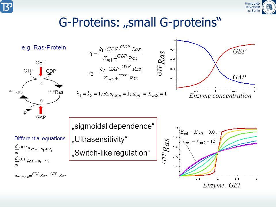 Humboldt- Universität zu Berlin G-Proteins: small G-proteins Differential equations e.g. Ras-Protein GDP Ras GTP Ras GDP GTP GEF GAP PiPi v1v1 v2v2 GT