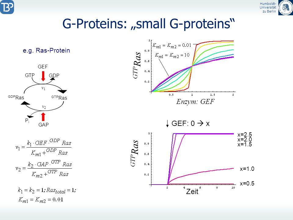 Humboldt- Universität zu Berlin G-Proteins: small G-proteins e.g. Ras-Protein GDP Ras GTP Ras GDP GTP GEF GAP PiPi v1v1 v2v2 GTP Ras Enzym: GEF GTP Ra